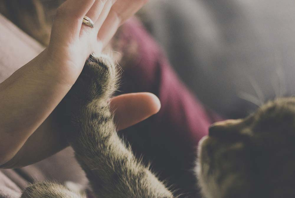 gato qualità